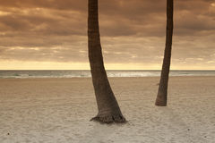 Palms on a quiet beach Royalty Free Stock Image