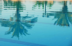 Palms reflection in pool Stock Photography