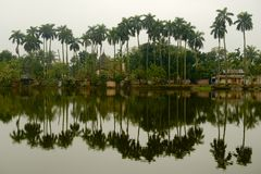 Palms and reflections in Puthia, Bangladesh. Stock Photos