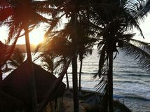 Palms resort Royalty Free Stock Photo