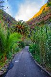 Palms with a road near Masca village with mountains, Tenerife, C Royalty Free Stock Photography