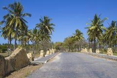 Palms road under sky Stock Image