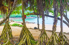 The palms` roots. The view on the coast of Jungle Beach through the palms` roots, Unawatuna, Sri Lanka stock photography