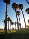 Palms of Salou beach Royalty Free Stock Photos