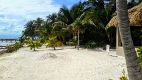 Tropica, greenery scene and hut stock images