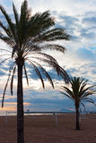 Palms on a sandy beach in early morning, Valencia region, Spain. Royalty Free Stock Image