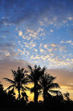 Palms scenery Stock Images