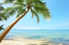 Palms and sea Royalty Free Stock Photography