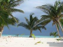 Palms and Sea. Mexican Beach - Riviera Maya - Quintana Roo stock image