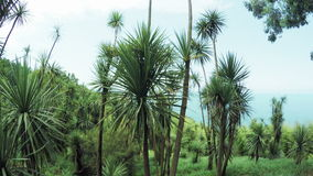 Palms on sea background. Batumi botanical garden with palm trees on background of sea stock video footage