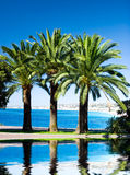 Palms on sea background with reflection in a water Stock Photography