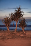Palms on sea background Royalty Free Stock Photos