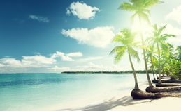 Palms and sea Stock Image