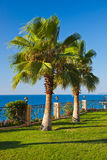 Palms on sea coast Royalty Free Stock Photos