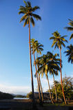 Palms at sea coast Royalty Free Stock Photography