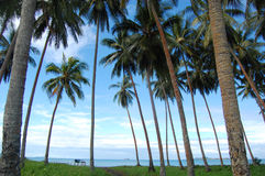 Palms at sea coast. Village in Papua New Guinea Stock Photo