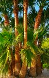 Palms on the seashore against royalty free stock photography