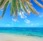 Palms by the shore Royalty Free Stock Photography