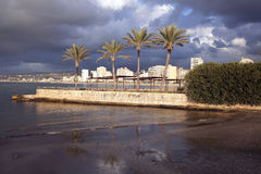 Palms in Sidon Royalty Free Stock Photos