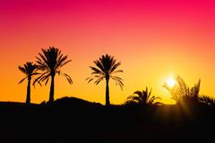 Palms silhouette Royalty Free Stock Images