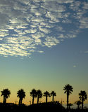 Palms silhouette on sunset Royalty Free Stock Images
