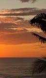Palms silhouetted vid solnedgången royaltyfri fotografi