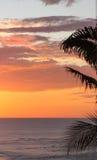 Palms silhouetted vid solnedgången fotografering för bildbyråer