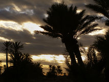 Palms silhouettes photography Royalty Free Stock Images