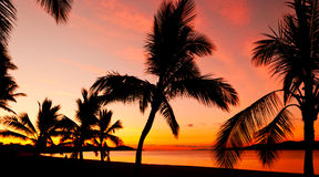 Palms silhouettes at sunset Royalty Free Stock Photo