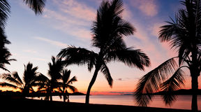 Palms silhouettes on a tropical beach Royalty Free Stock Image