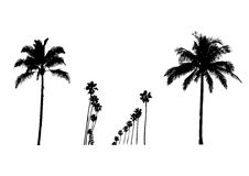Palms silouette Royalty Free Stock Image