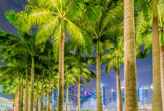 Palms in Singapore Royalty Free Stock Photography