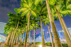 Palms in Singapore during night time Royalty Free Stock Image