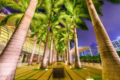 Palms in Singapore Stock Image