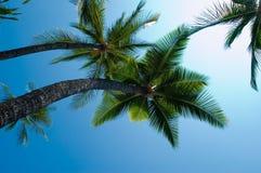 Palms and skies Royalty Free Stock Photos