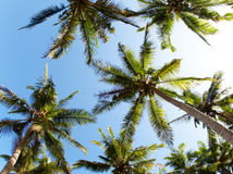 Palms and sky Royalty Free Stock Image