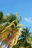 Palms and sky Stock Images