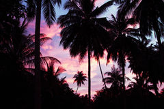 Palms and sky Stock Image