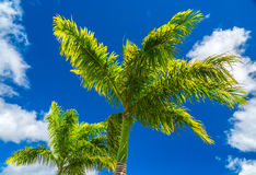 Palms in the sky stock photos