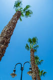 Palms in the sky Royalty Free Stock Images