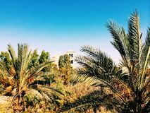 Palms. summer. Happiness. Palms in summer between Israel and Jordania Stock Images