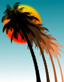 Palms and sun. Silhouette of palms at sun Stock Photos