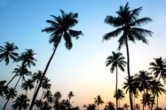Palms and sun,