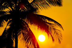 Palms and sun Royalty Free Stock Photo