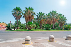 Palms and sun Royalty Free Stock Images