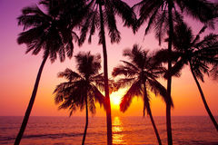 Palms and sun Stock Photography