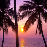 Palms and sun, Stock Photography