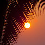Palms and sun, Royalty Free Stock Photography