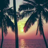 Palms and sun, tropical sunset Stock Photos