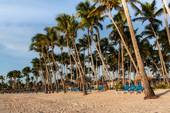 Palms and sunbeds on the beach Stock Image